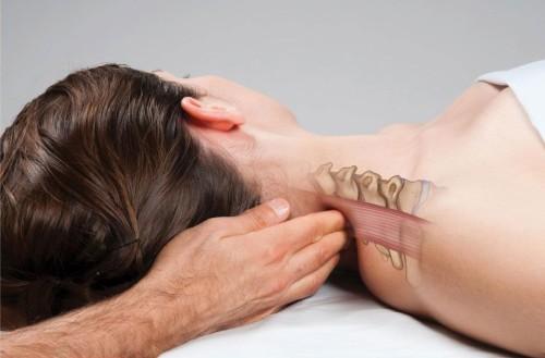 Мышцы и фасции шейного отдела