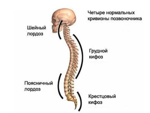 Болит спина на 26 неделе беременности