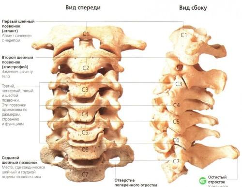 Боль слева ниже поясницы при движении